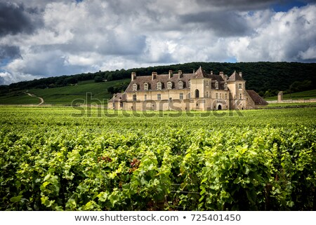 The vineyards of Clos de Vougeot, Burgundy, France  Stock photo © Hofmeester