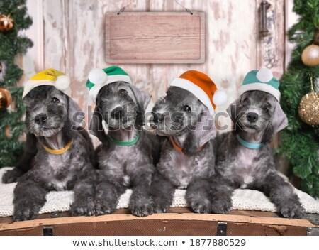 nove · cani · gruppo · cuccioli · tavola - foto d'archivio © feedough