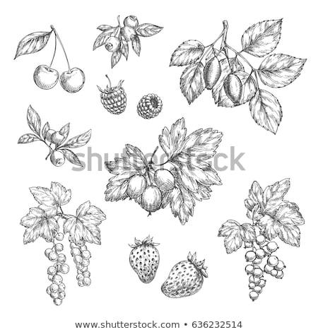 ラズベリー · 冷凍庫 · 食品 · フルーツ - ストックフォト © taviphoto