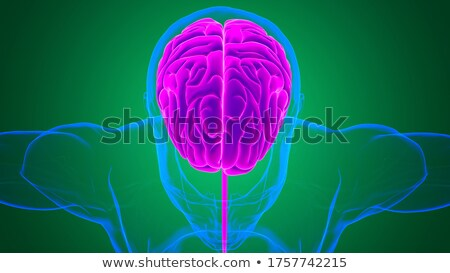 Brain Nerve Cells Stock photo © Lightsource