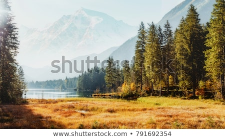 spring landscape with spruce forest in the mountains stock photo © kotenko