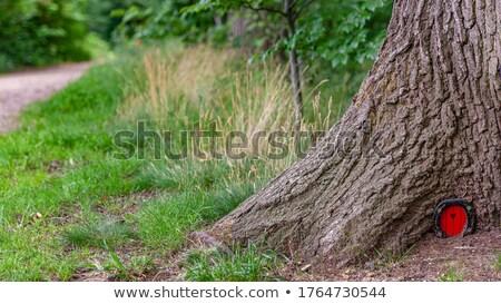 Houten huis natuur illustratie boom achtergrond Stockfoto © colematt