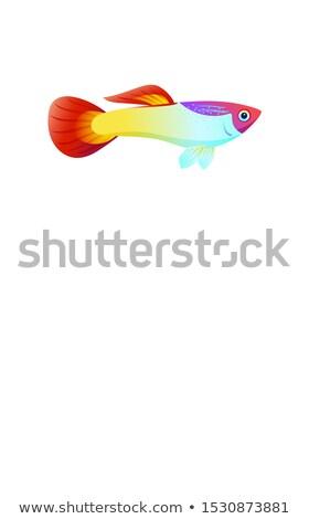 Aquarium Guppy Fish Poster with Text Sample Marine Stock photo © robuart