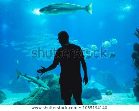 Oceanarium Underwater World. Group of People Watching Fish in a Oceanarium. Stock photo © matimix
