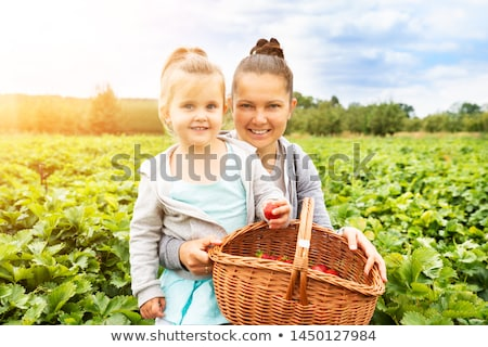 girl picking strawberries together with her mother stock photo © andreypopov