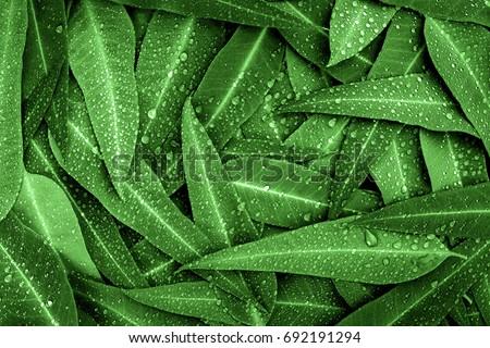 Eucalyptus tree skin Stock photo © smithore