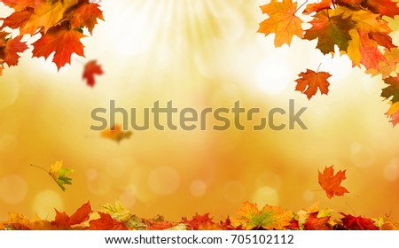 detail of autumnal tree leaves stock photo © alessandrozocc