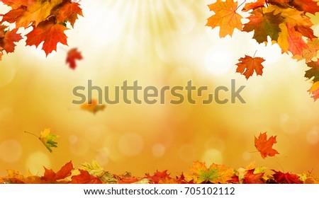 Részlet őszi fa levelek citromsárga narancs Stock fotó © AlessandroZocc