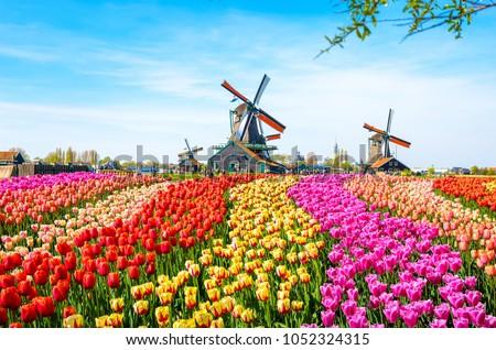 holland · tulp · velden · mooie · levendig · Pasen - stockfoto © tannjuska