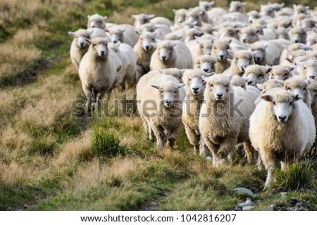 ребенка · ягненка · фермы · матери · овец - Сток-фото © stoonn