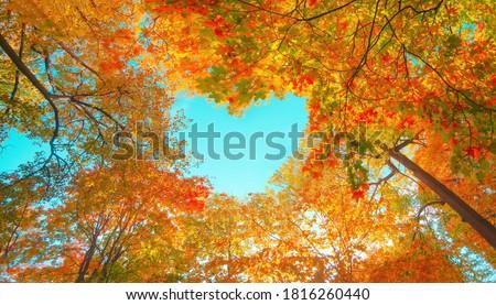 Düşmek ağaç kırmızı sarı yaprakları sonbahar Stok fotoğraf © Andriy-Solovyov