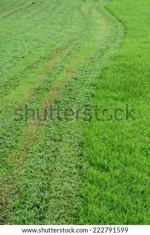 track cut grass stock photo © smuki