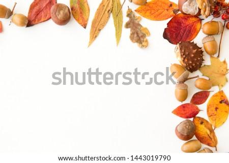 Castanha natureza temporada botânica diferente Foto stock © dolgachov