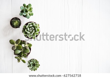 Green plant in wood pot Stock photo © nalinratphi