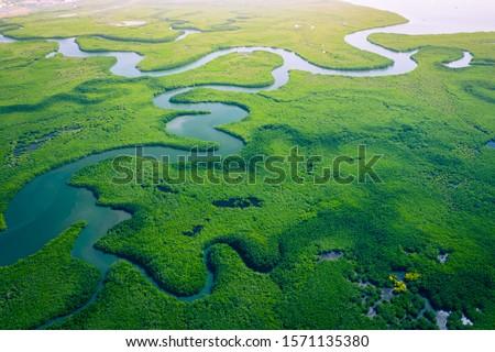 Mangrove Forest Stock photo © meinzahn