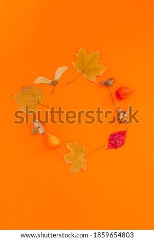 dry leaves conceptual frame Stock photo © marekusz
