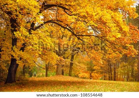 Peaceful Autumn Background Photo stock © Taiga