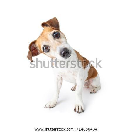 любопытный · собака · шее · из - Сток-фото © willeecole