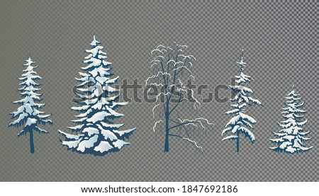 Frost and snow covered tree  Stock photo © mikdam
