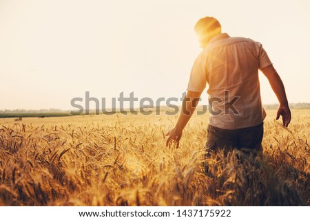 Gazda búzamező kéz termény törődés védelem Stock fotó © stevanovicigor