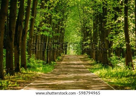Footpath in spring wood Stock photo © tetkoren