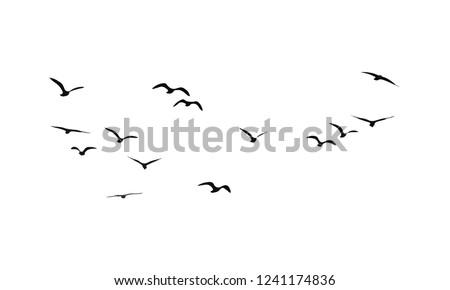 Ptaków pływające charakter ilustracja wody projektu Zdjęcia stock © bluering