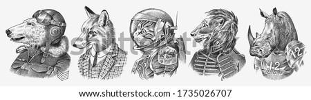 Stok fotoğraf: Set Of Female Lion Character