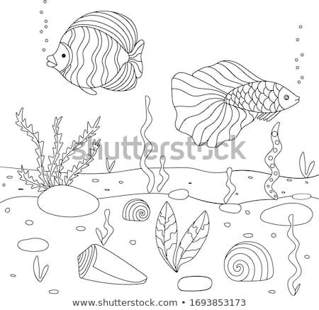 水 図書 実例 先頭 サンゴ 海 ストックフォト © lenm