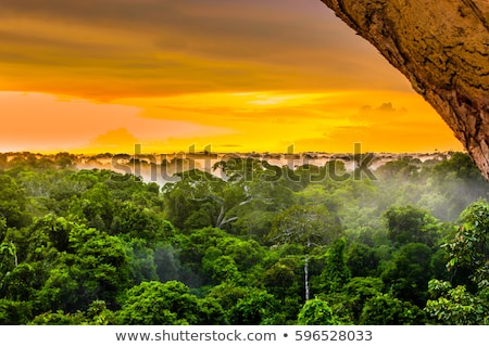 red sunset over the rain forest stock photo © galitskaya