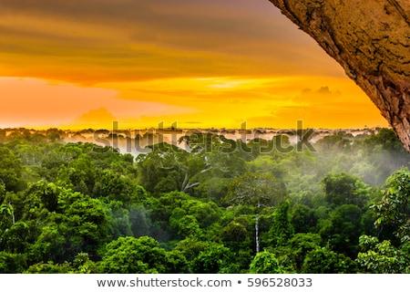 Kırmızı gün batımı rainforest akşam gökyüzü ağaç Stok fotoğraf © galitskaya