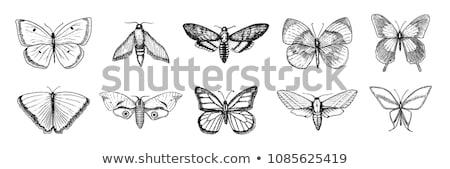 Vol contour papillons battant artistique blanche Photo stock © blackmoon979