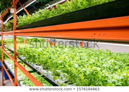 Perspective of green seedlings of new sorts of horticultural plants Stock photo © pressmaster
