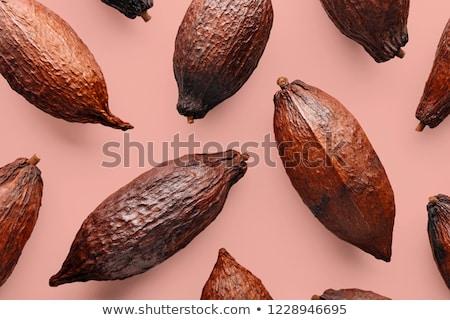 Organisch patroon bruin boon diagonaal Stockfoto © artjazz
