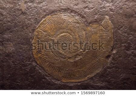 Fósil lámpara madera naturaleza rock Foto stock © galitskaya