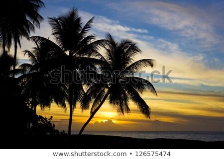 日没 · カリビアン · 海 · カメ · ビーチ · ツリー - ストックフォト © phbcz