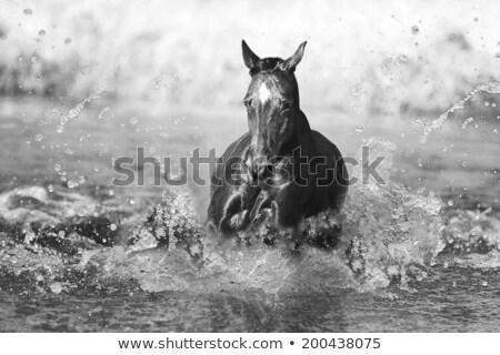 Flock of horses in splashes Stock photo © olgaru79