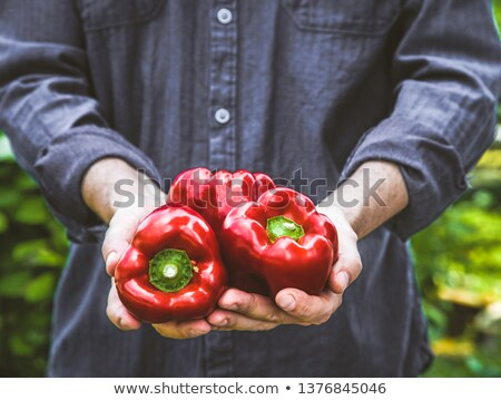 Holding Paprika Photo stock © mythja