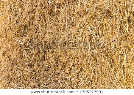 Hay Stacks In Autumn Field stock photo © alex_davydoff