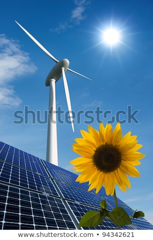 Sunflower And Solar Panels With Sunshine Stok fotoğraf © visdia