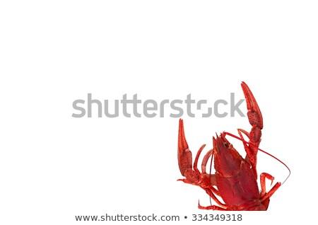 Stock photo: Boiled crawfish on white background