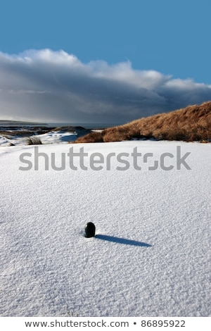 coastal snow covered links golf course in storm stock photo © morrbyte