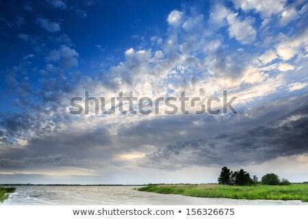 Holandés granja paisaje Países Bajos verano Foto stock © gigra