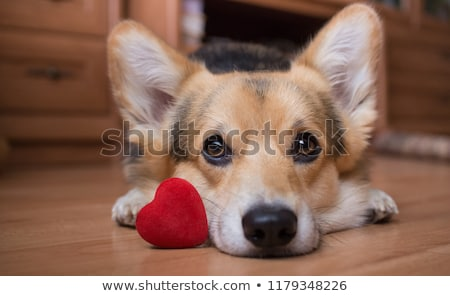 adult and puppy dog stock photo © willeecole