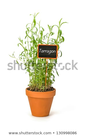 Tarragon In A Clay Pot With A Wooden Label Photo stock © Zerbor
