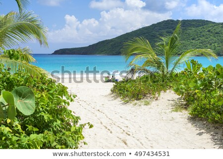 ağaçlar · caribbean · tropikal · plaj · su · doğa - stok fotoğraf © arenacreative
