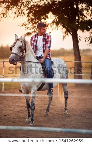Foto stock: Joven · caballo · negro · semental · campo · hombre