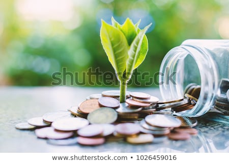 Money growth concept with coins and seedling Stock photo © Elnur