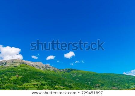 fenyőfa · hegyoldal · kék · ég · égbolt · fű · erdő - stock fotó © alinamd