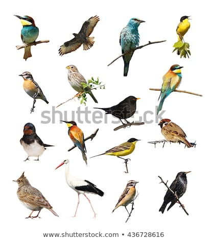collection of bird isolated stock photo © anan