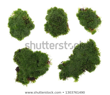 Green Moss Grass Stock photo © rghenry